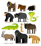 Set Of Different African Animals Isolated Royalty Free Stock Image