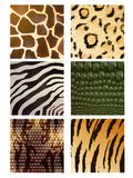 Set of Different Animal Skins Stock Image