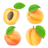 Set of different apricot fruits isolated Stock Photos
