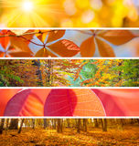 Set of Different Autumn Banners - colorful backgrounds, beautifu Stock Photo