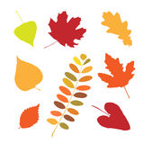 Set of different autumn leaves Stock Photos