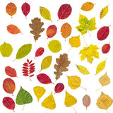 Set of different autumnal leaves Royalty Free Stock Images