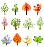 Set of different beautiful trees Royalty Free Stock Photos