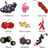 Set of different berries Royalty Free Stock Photo