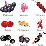 Set of different berries. Set of 9 different berries Royalty Free Illustration