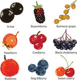 Set of different berries. 9 different berries on a white background Stock Images