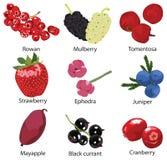 Set of different berries. Set of 9 different berries Royalty Free Stock Photo