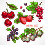 Set with different berries Stock Photos