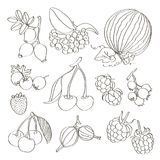Set of different berries. Vector fruit mix. Illustration for healthy eating and organic foods royalty free illustration
