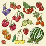Set of different berries. Vector fruit mix. Illustration for healthy eating and organic foods stock illustration