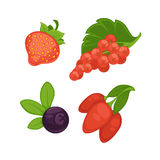 Set of different berries. Vector illustration of different fresh berries on branches isolated on white Stock Image