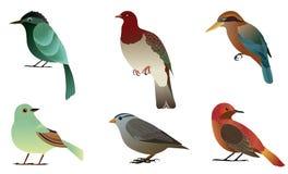 Set of different birds. Bird in details vector illustration Stock Image