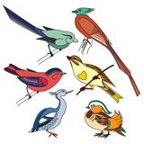 Set of different birds. Colorful illustration. Set of different birds for children book illustration, stickers or mobile applications, design for invitation Royalty Free Stock Photography