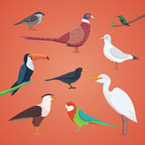 Set of different birds isolated. vector collection cartoon bird. S eps10 Stock Photos