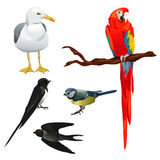 Set of different birds Royalty Free Stock Photos