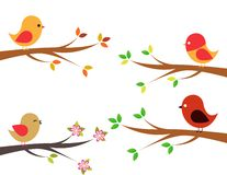 Set of different birds Stock Image