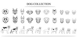 Set of different breeds of dogs. stock illustration