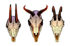 Set of different bull skulls with horns royalty free illustration