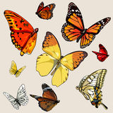 Set of different butterflies in flight Royalty Free Stock Photography