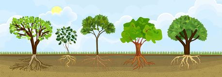 Set of different cartoon deciduous trees with green crown and root system. Plants showing root structure below ground level stock illustration