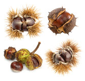 Set of different chestnuts on white Royalty Free Stock Photos