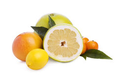 Set of different citrus. Different citrus fruit with laeves on white background Royalty Free Stock Photography