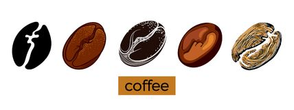 Set of different coffee beans on white background. Vector collection. Sketch stock illustration