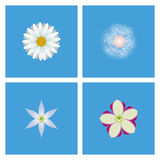 Set Of Different Colorful Flowers Isolated Royalty Free Stock Photo