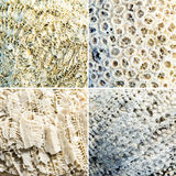 Set of different coral texture Royalty Free Stock Images