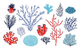 Set of different corals and seaweed or algae isolated on white background. Bundle of marine species, deep sea creatures. Ocean flora and fauna. Underwater vector illustration