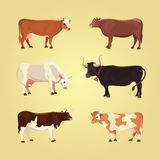 Set of different cows, . Vector illustration. Eps 10. Royalty Free Stock Photo