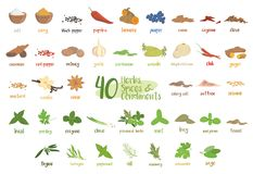 Set of 40 different culinary herbs, species and condiments in cartoon style. Vector illustration stock illustration