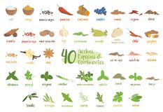 Set of 40 different culinary herbs, species and condiments in cartoon style. Spanish names. Vector illustration stock illustration