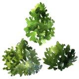 Set of different deciduous trees Stock Photo