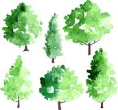 Set of different deciduous trees Stock Image