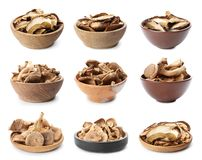 Set of different dishware with dried mushrooms. On white background royalty free stock photography