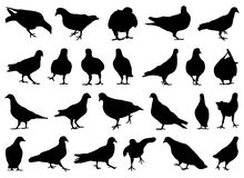 Set of different doves. On white Royalty Free Stock Image