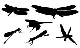 Set of different dragonflies. On white Stock Images