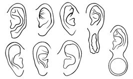 Set of different ears Royalty Free Stock Image
