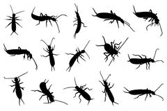 Set of different earwigs Stock Photography