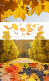 Set of different fall banners - Autumn backgrounds. Beautiful Autumn royalty free stock photo