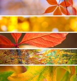 Set of Different Fall Banners - beautiful Autumn season stock images