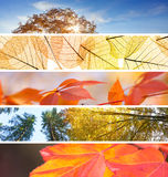 Set of Different Fall Banners - colorful autumn abstract  backgr Royalty Free Stock Image