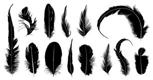 Set of different feathers Royalty Free Stock Photos