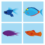 Set Of Different Fishes Isolated On Background Royalty Free Stock Photos