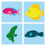 Set Of Different Fishes Isolated On Background Royalty Free Stock Photography