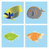 Set Of Different Fishes Isolated On Background Royalty Free Stock Photo