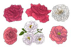 Set of different flowers in doodle style. Hand drawn elements for wedding floral design, vector illustration. Spring blossom. Set of different flowers in doodle royalty free illustration