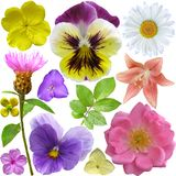 Set of Different Flowers Royalty Free Stock Image