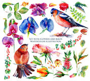 Set of different flowers, leaves and birds for design. Stock Photography